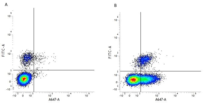 CD54 Antibody | 15.2 gallery image 2