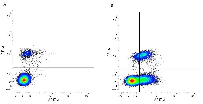 CD54 Antibody | 15.2 gallery image 3