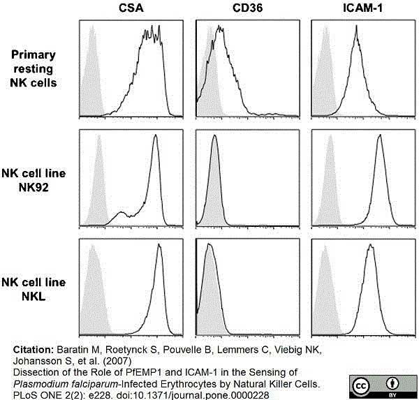 CD54 Antibody | 15.2 gallery image 5