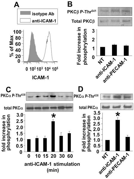 CD54 Antibody | 84H10 gallery image 1