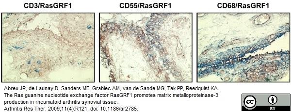 CD55 Antibody | 67 gallery image 3
