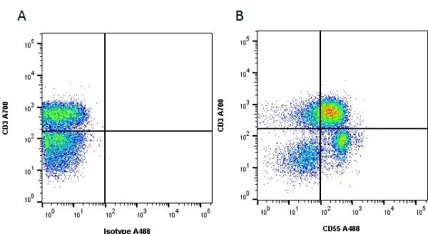 CD55 Antibody | 67 gallery image 2
