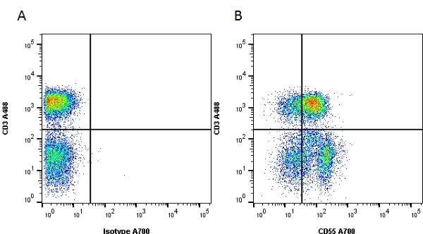 CD55 Antibody | 67 gallery image 4