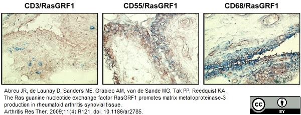 CD55 Antibody | 67 gallery image 6