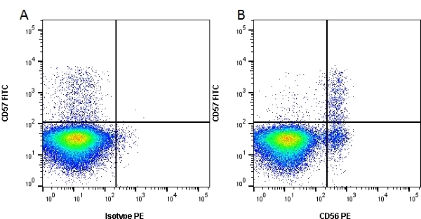 CD56 Antibody | C5.9 gallery image 1