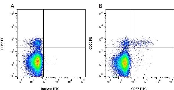 CD57 Antibody | TB01 gallery image 1