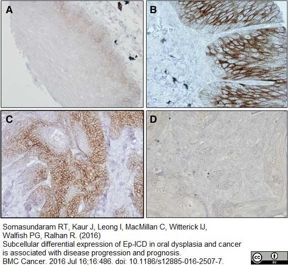 CD58 Antibody | MEM-63 gallery image 10