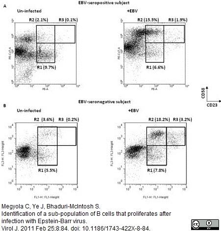 CD58 Antibody   MEM-63 thumbnail image 7