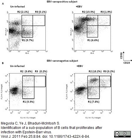 CD58 Antibody   MEM-63 gallery image 7