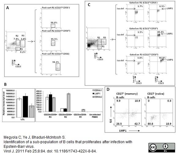 CD58 Antibody   MEM-63 thumbnail image 9