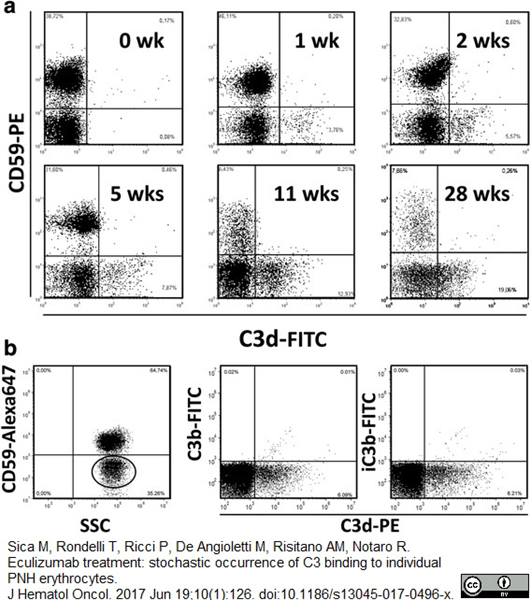 CD59 Antibody   MEM-43 gallery image 1