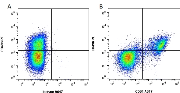 CD61 Antibody | Y2/51 gallery image 1