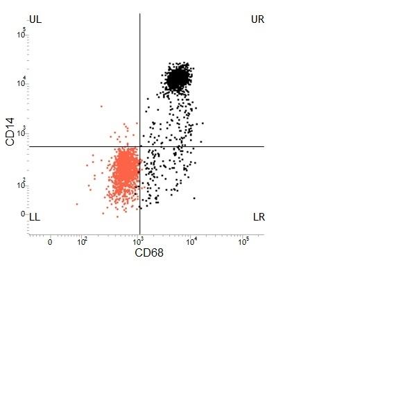 CD68 Antibody | KP1 gallery image 4