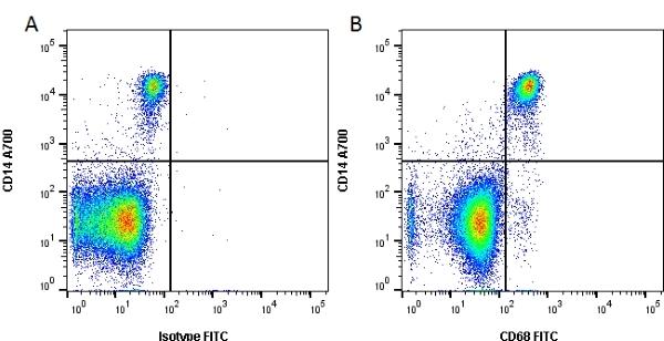 CD68 Antibody   Y1/82A gallery image 2