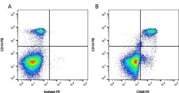 CD68 Antibody   Y1/82A gallery image 3
