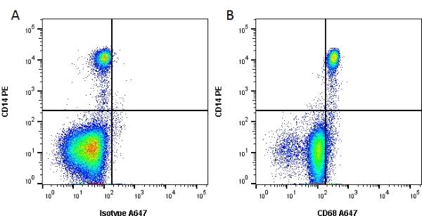 CD68 Antibody   Y1/82A gallery image 1