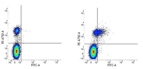 CD74 Antibody | Bu45 gallery image 1