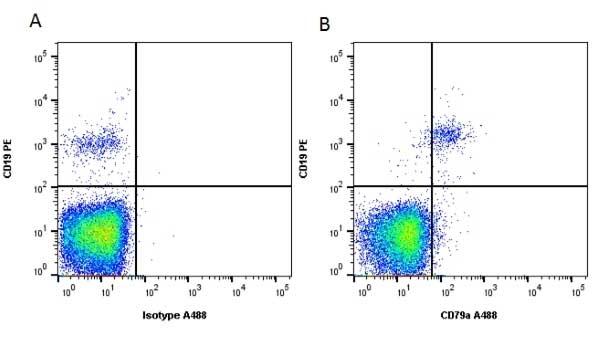 CD79a Antibody   HM57 gallery image 1