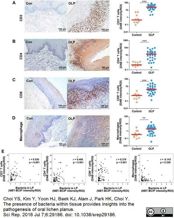 CD8 Antibody   4B11 gallery image 5