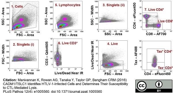 CD8 Antibody | LT8 gallery image 2