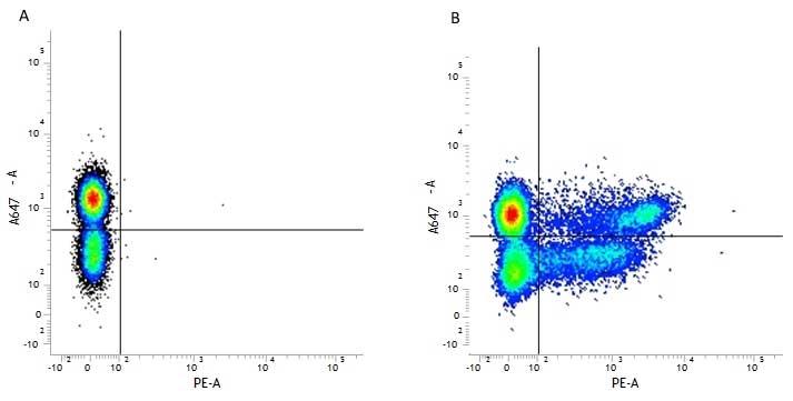 CD8 Antibody | LT8 gallery image 8
