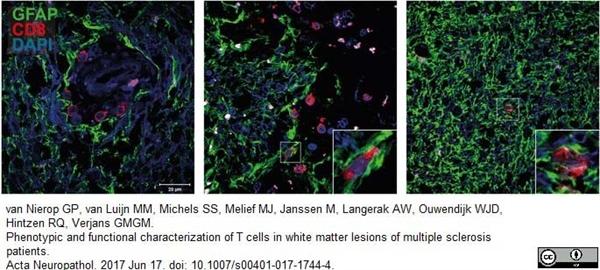 CD8 Antibody | YTC182.20 gallery image 10