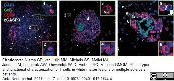 CD8 Antibody   YTC182.20 gallery image 7