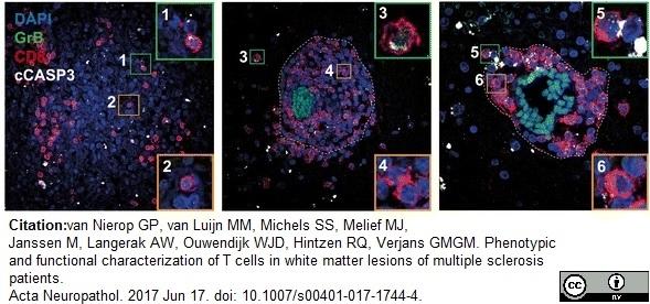 CD8 Antibody | YTC182.20 gallery image 9
