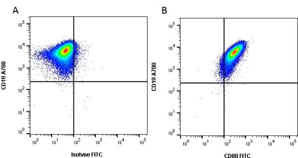 CD80 Antibody | MEM-233 gallery image 1