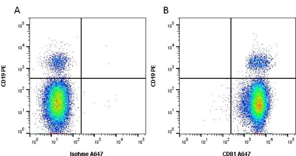 CD81 Antibody | 1D6 gallery image 2