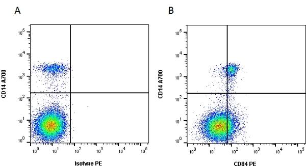 CD84 Antibody   CD84.1.21 gallery image 1