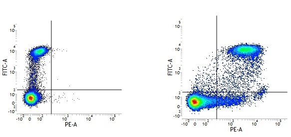CD9 Antibody | MM2/57 gallery image 2