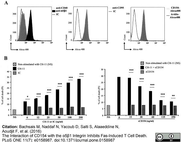 CD95 Antibody | LOB 3/17 gallery image 3