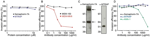 CDw108 Antibody | MEM-150 gallery image 1
