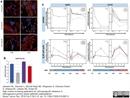Cytokeratin 19 Antibody | A53-B/A2 thumbnail image 6