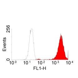 EGF R Antibody | ICR10 gallery image 1
