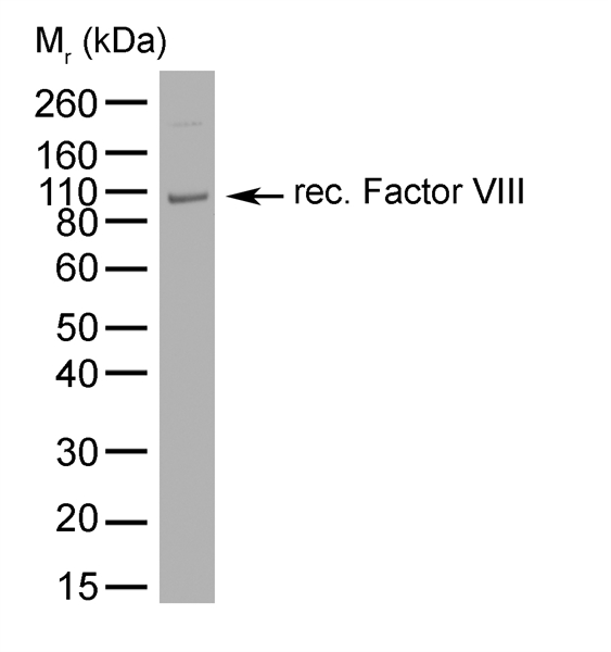 Factor VIII Antibody | RFF-VIIIC/10 gallery image 1