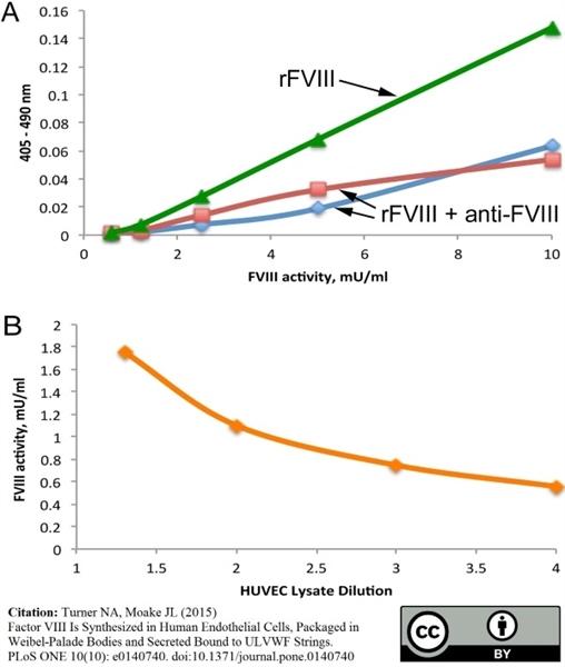 Factor VIII Antibody | RFF-VIIIC/8 gallery image 2