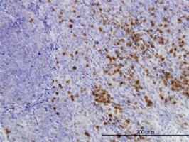 GLRX Antibody | 3C11 gallery image 1