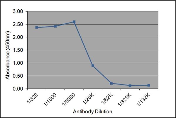 IGF-I Antibody | 175.2E7 gallery image 1