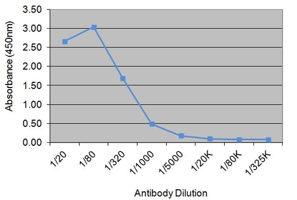 IGF-I Antibody | 71.1D8 gallery image 1