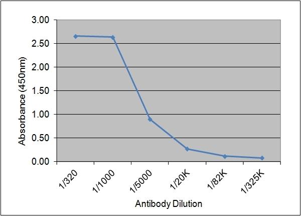 IGF-I Antibody | 71.1E8 gallery image 1