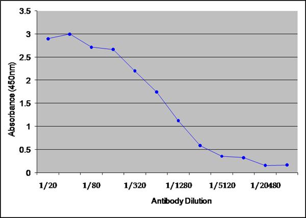 IgG Antibody   6936 gallery image 1
