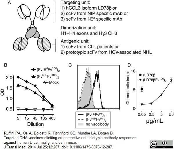 IgG Antibody | A57H gallery image 1