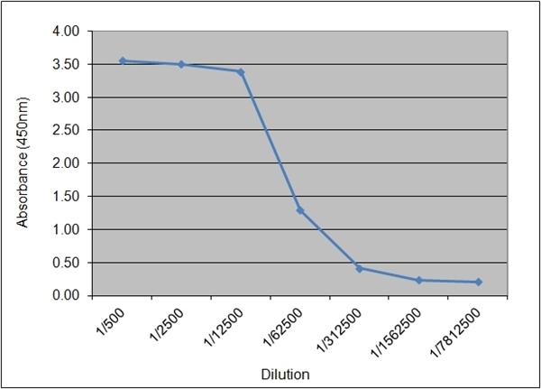 Insulin/Proinsulin Antibody | 130.4B4 gallery image 1