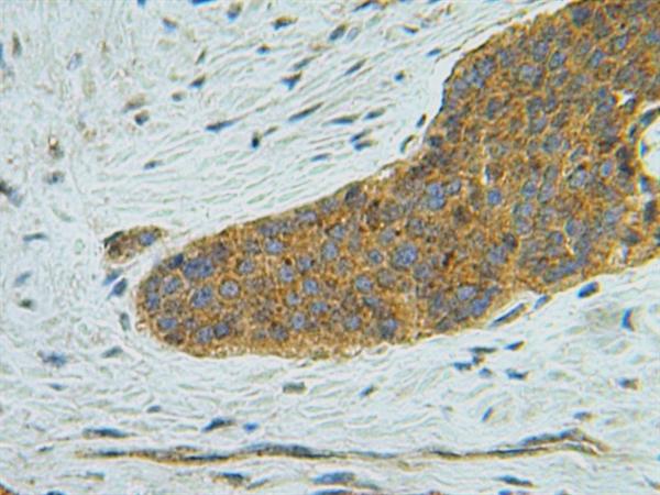 IP-10 Antibody gallery image 4
