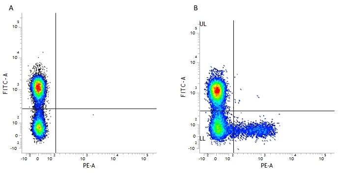 KIR Antibody   NKVFS1 thumbnail image 1