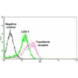 LOX-1 Antibody gallery image 1