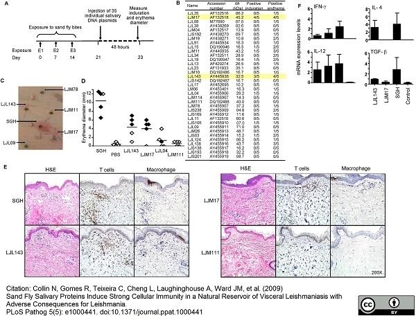 Macrophages/Monocytes Antibody | MAC387 gallery image 6
