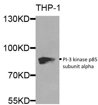 PI-3 Kinase p85 Subunit Alpha Antibody gallery image 1